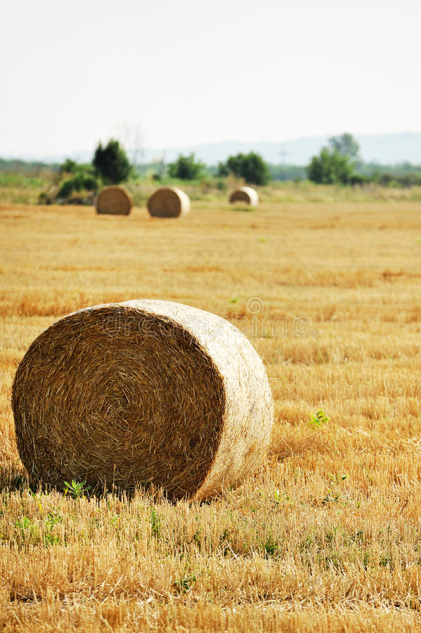 Hay bales on a field stock photography
