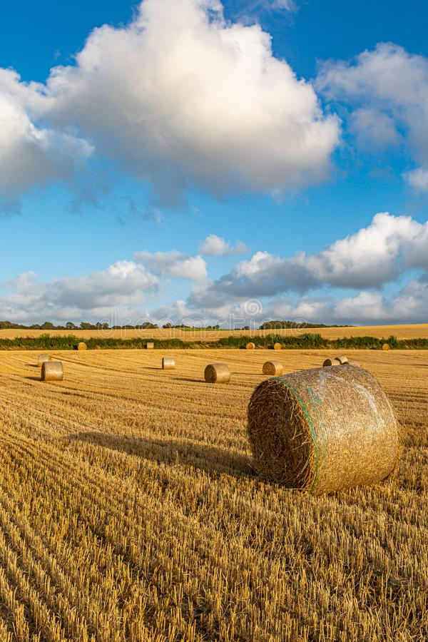 Hay Bales at Harvest Time. Hay bales in a field in Sussex, on a sunny summers evening stock images