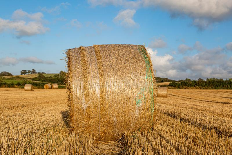 Hay Bales at Harvest Time. Hay bales in a field in Sussex, on a sunny summers evening royalty free stock photography