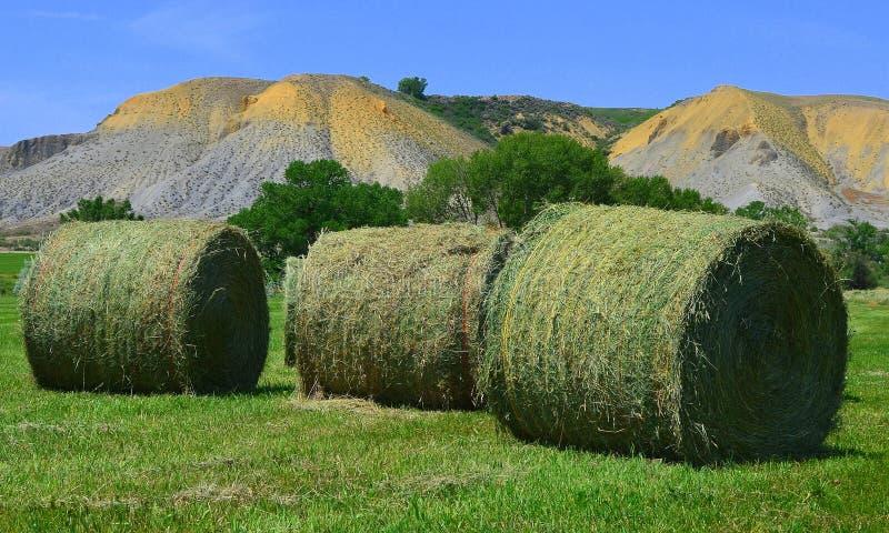 3 hay bales stock photography