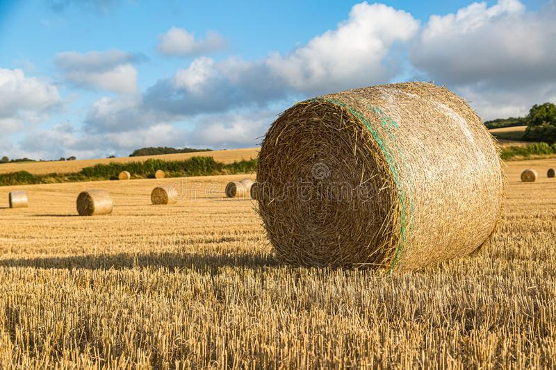 Hay Bales at Harvest Time. Hay bales in a field in Sussex, on a sunny summers evening stock photo