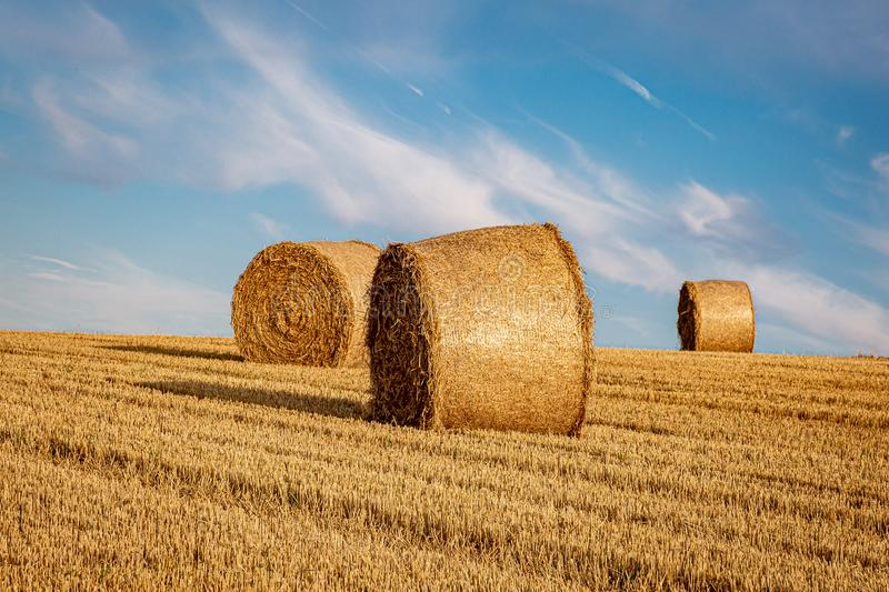 Hay Bales at Harvest Time. Hay bales in a field in Sussex, on a sunny summers evening royalty free stock photo