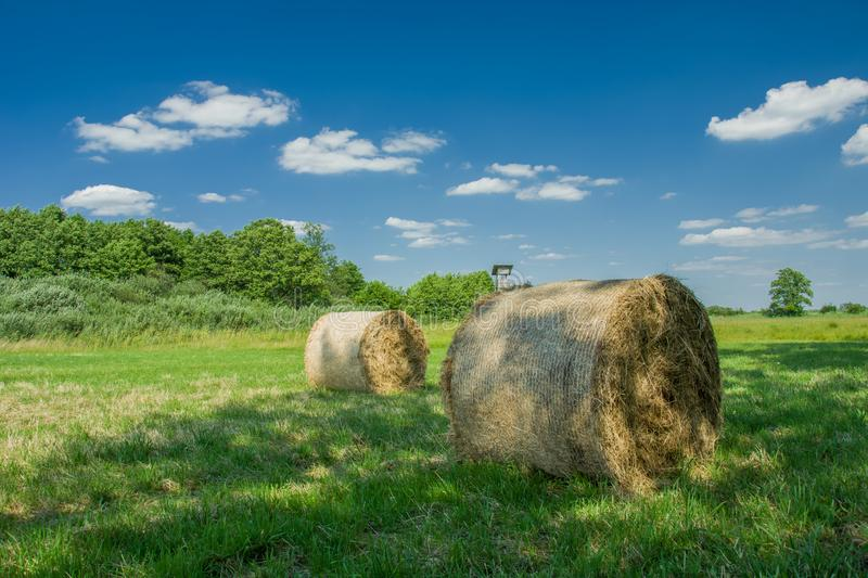 Hay bales lying in the shadow of trees on a meadow, white clouds and blue sky stock photo