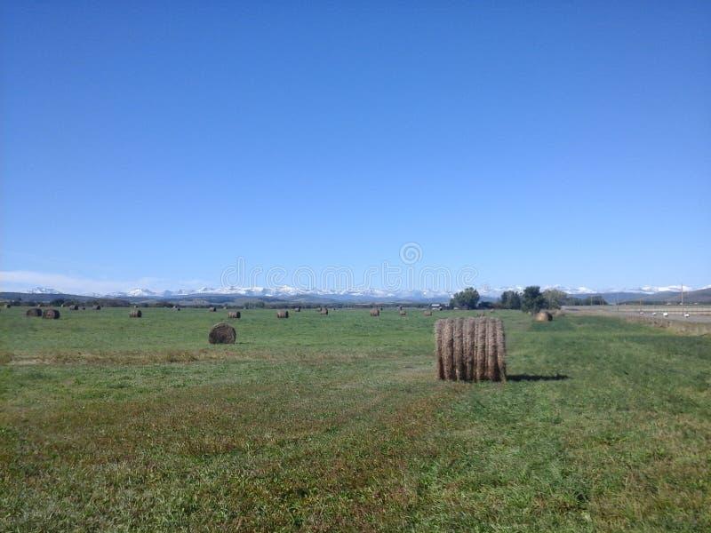 Hay Bales nelle colline pedemontana fotografie stock libere da diritti
