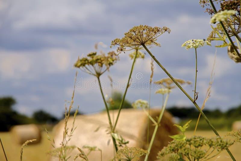 Hay Bales in Nordwest-England lizenzfreie stockbilder