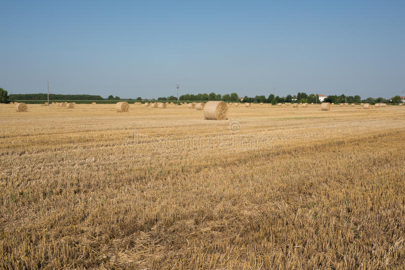 Hay balls in a wheat field stock photography