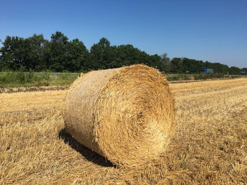 Hay bundle. On Ukrainian field stock photo