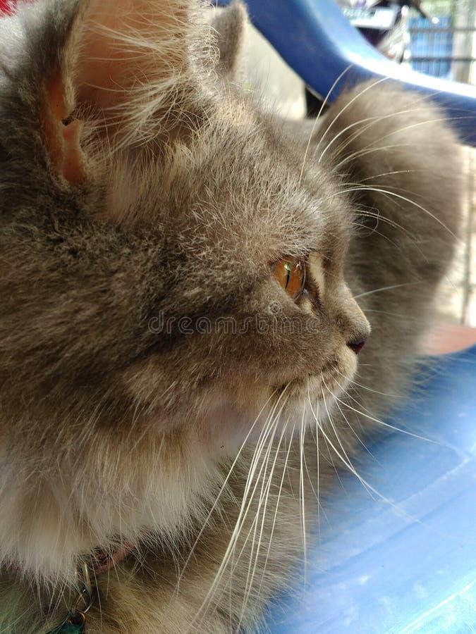 Hay cat stock photography