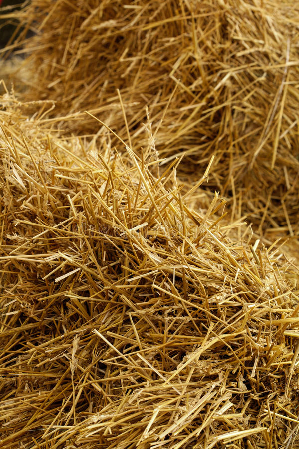Download Hay on the entire frame stock image. Image of agriculture - 83700835