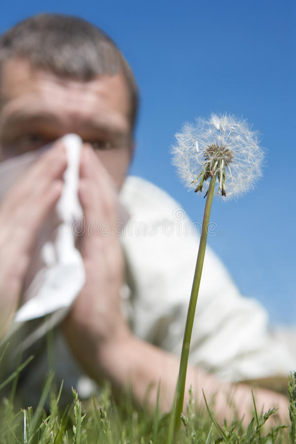 Hay fever royalty free stock images