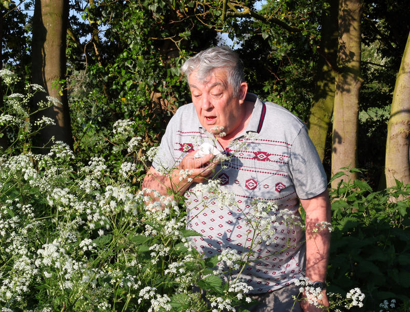Hay fever sufferer sneezing. Allergic rhinitis stock photography