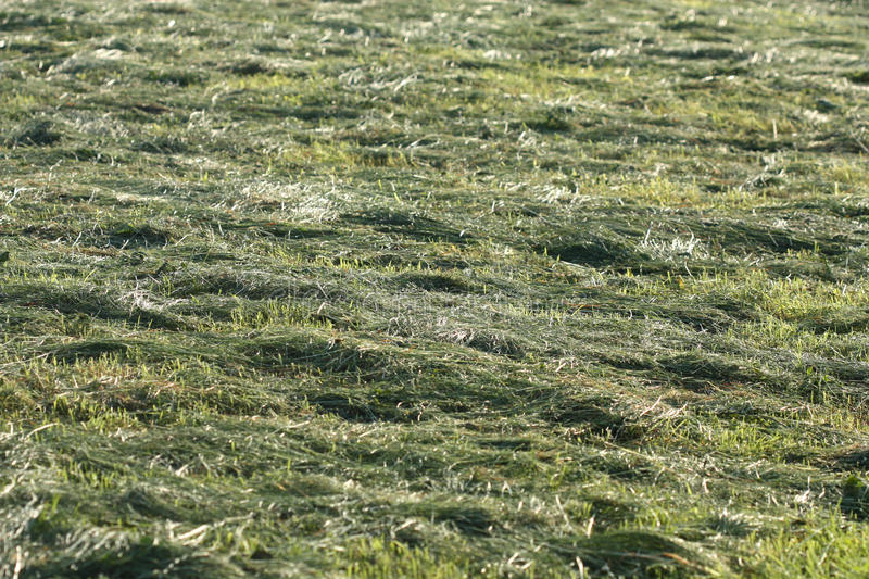 Download Hay on the field stock image. Image of nature, natural - 15679247