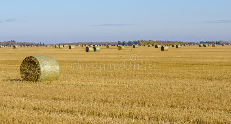 Hay Field stock fotografie