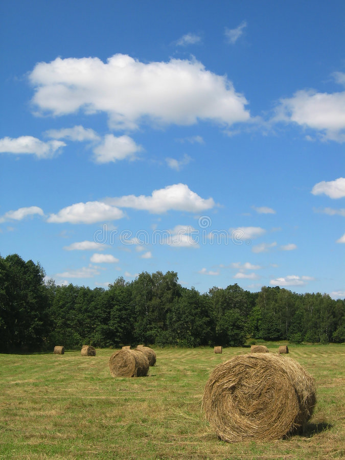 Download Hay field stock image. Image of field, bail, peace, tree - 75985