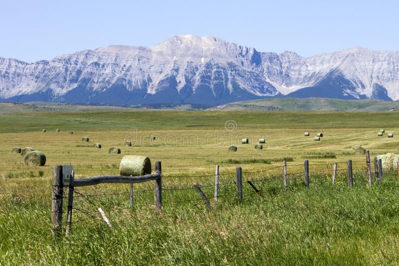 Hay Field Alberta rodado bala imágenes de archivo libres de regalías