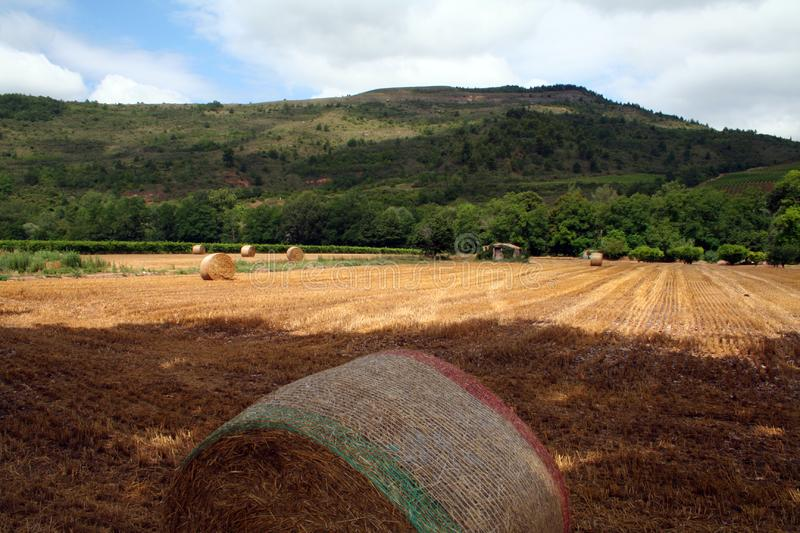 Hay field after harvest
