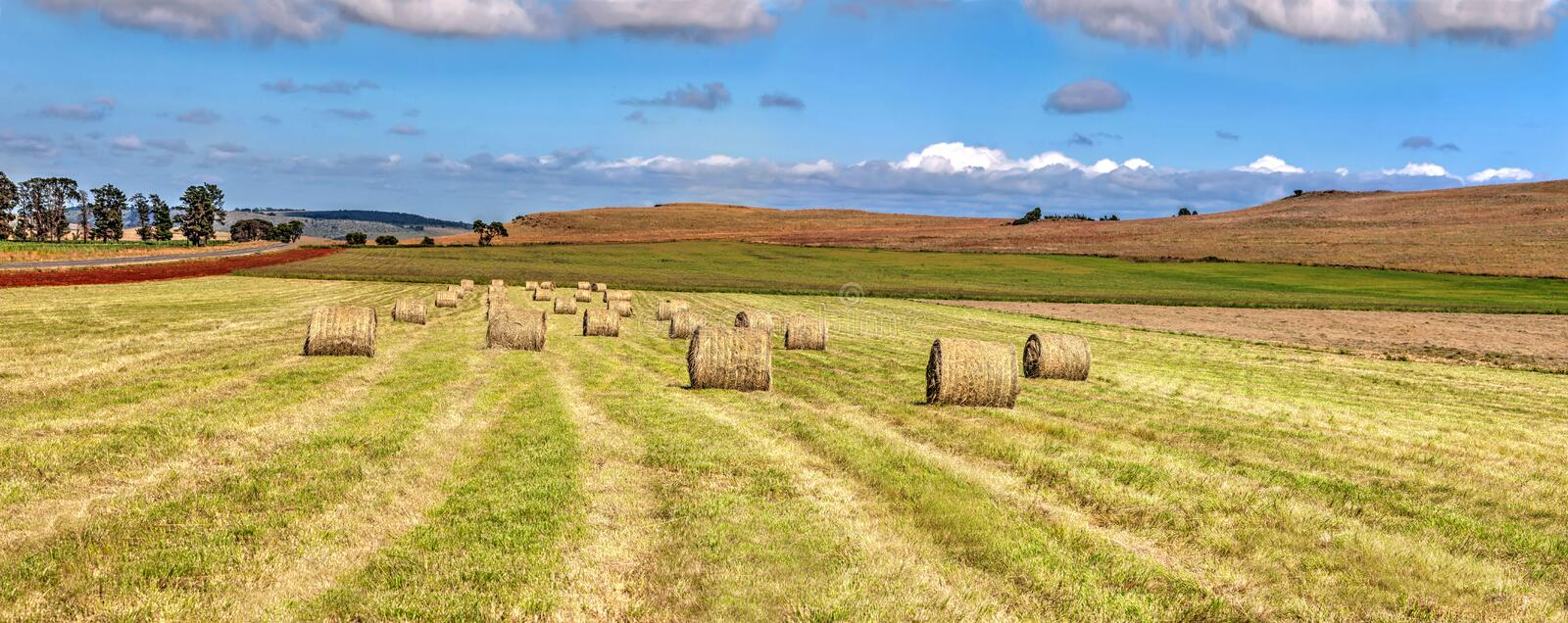 Large hay field. Landscape hayfield with hay rolls, against a cloudy blue sky royalty free stock photography