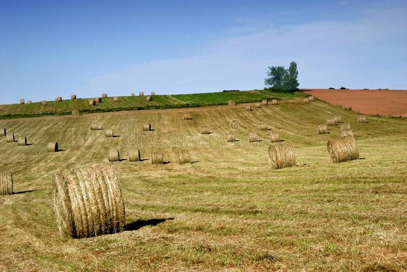 Hay Field mit großen Ballen stockfotografie