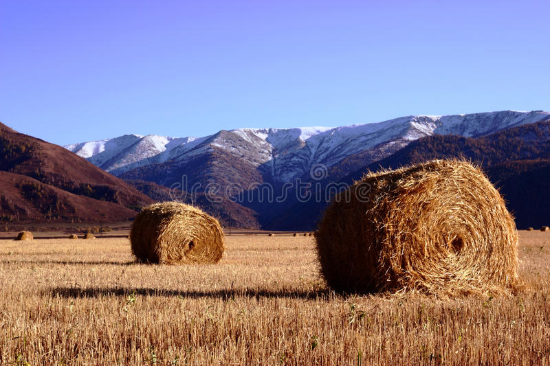 Download Hay In The Field With Mountains On A Background Stock Photo - Image of grow, plant: 22037372