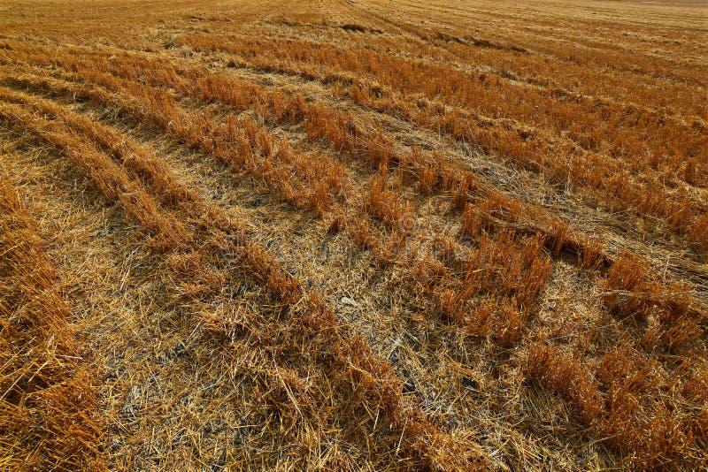 Hay Field Stubble foto de archivo libre de regalías