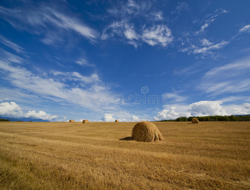 Hay field, USA