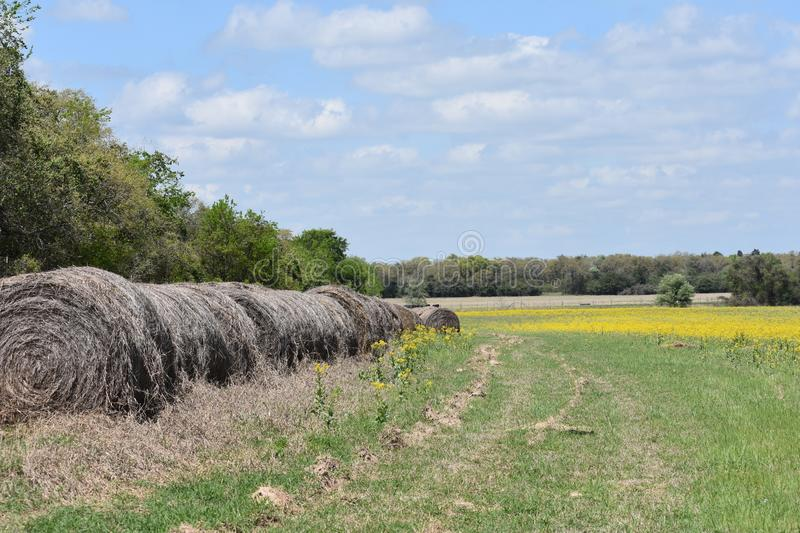 Hay and a Field of yellow wild flowers in South Texas. This was taken in South Texas, while driving around looking for nice patches of flowers stock photography