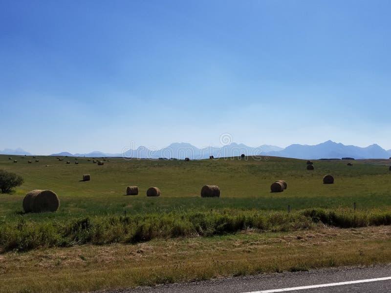 Hay fields stock photo
