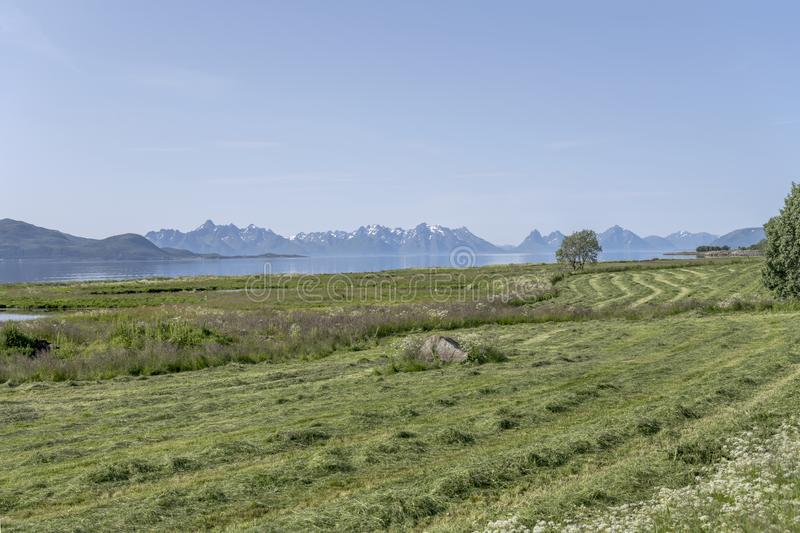 Hay fields and  lush vegetation on fjord coast, near Gjerstad, Norway. Landscape with hay fields and  green lush vegetation on fjord shore, shot in bright summer stock photos