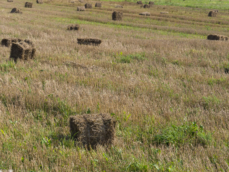 Hay and grass landscape stock photo