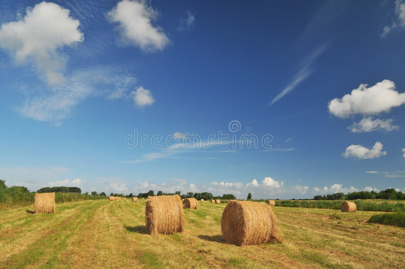 Download Hay harvest stock photo. Image of nobody, landscape, rolls - 9140264