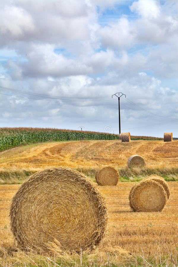Download Hay harvest roll stock image. Image of summer, crops - 26693901