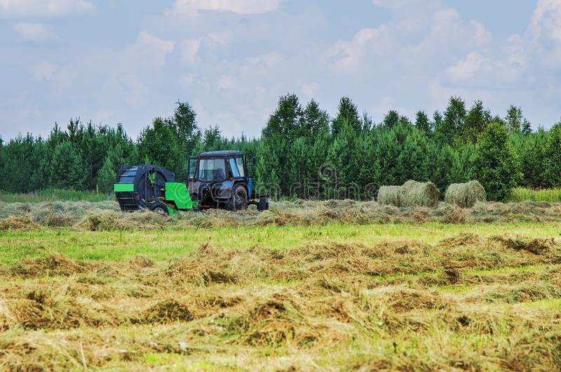 Hay harvesting with the help of special equipment. Tractor with baler discharges for hay harvesting in the field stock image