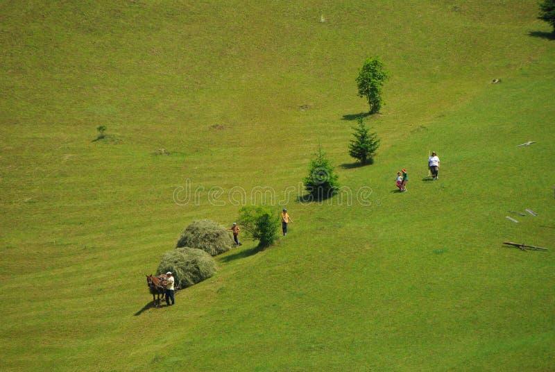 Hay harvesting in Transylvania stock photo
