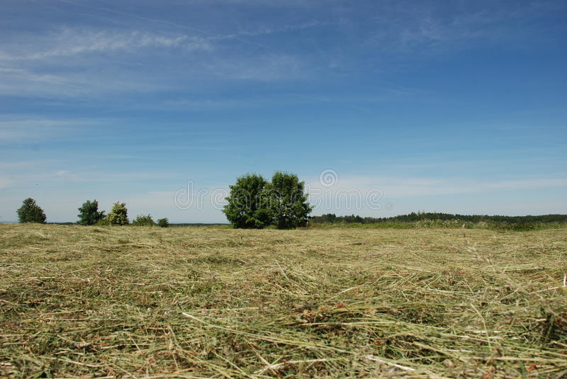 Hay meadow with trees stock photo