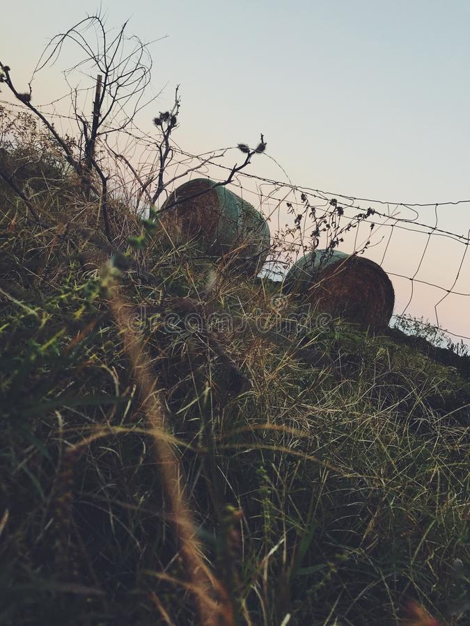 Hay perspective. Amazing hay perspective with slight sunset royalty free stock image