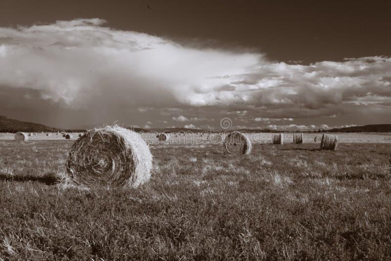 Hay on the prairie. royalty free stock photos