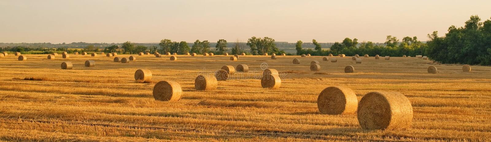 Hay-roll in golden field landscape stock photography