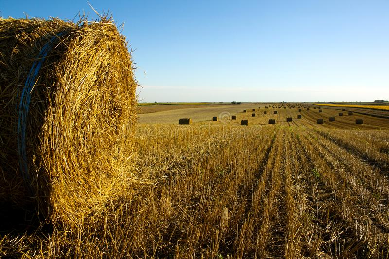 Hay roll on the field royalty free stock photo