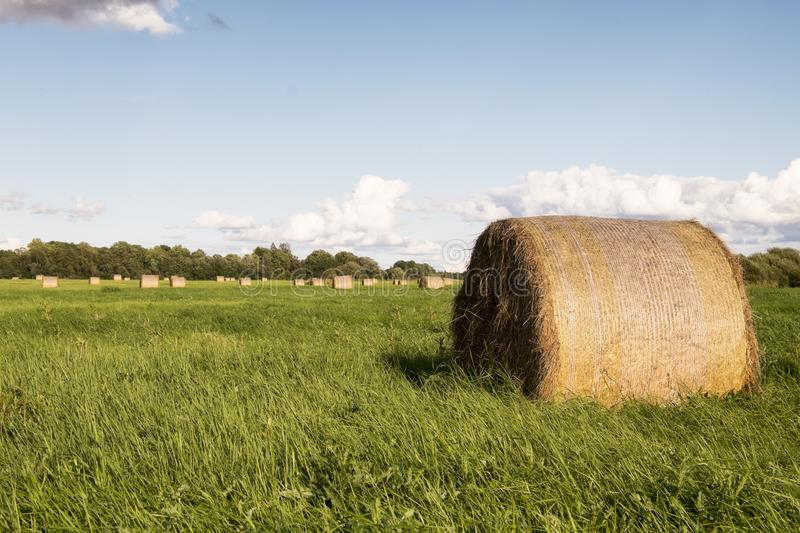Hay roll on the meadow stock photography
