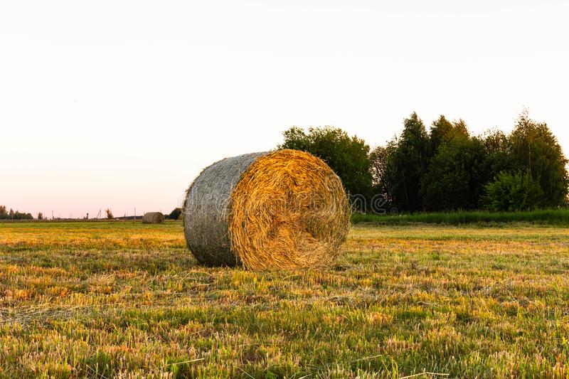 Hay in roll royalty free stock images