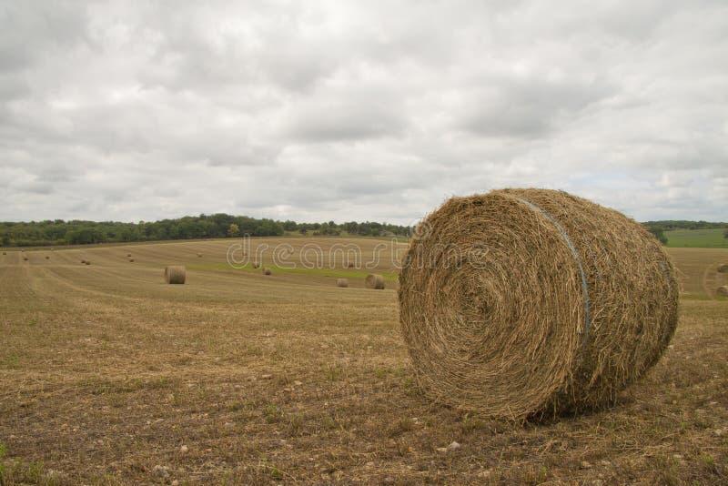 Download Hay rolls stock photo. Image of grain, bright, hayroll - 21035956