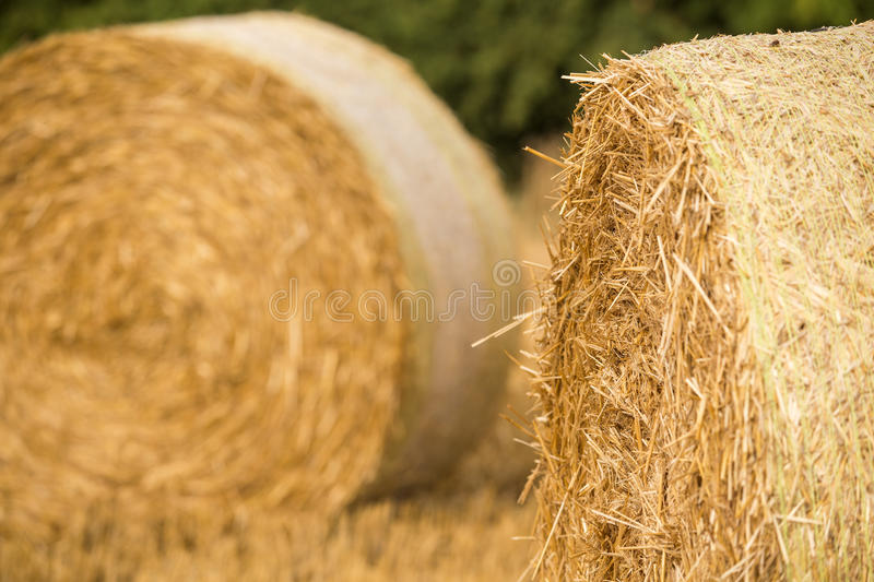 Hay rolls. On the agriculture field, wheat harvest time royalty free stock photo