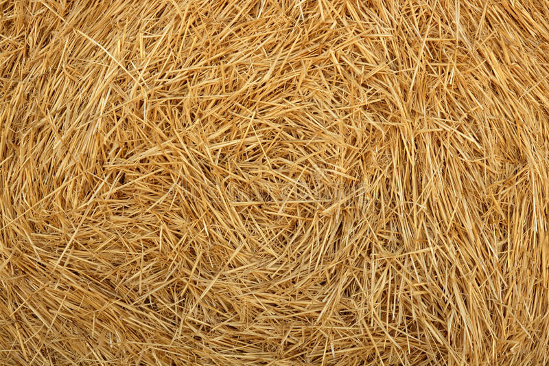 Download Hay Round Bale Of Dried Wheat Cereal Stock Photo - Image: 11367460