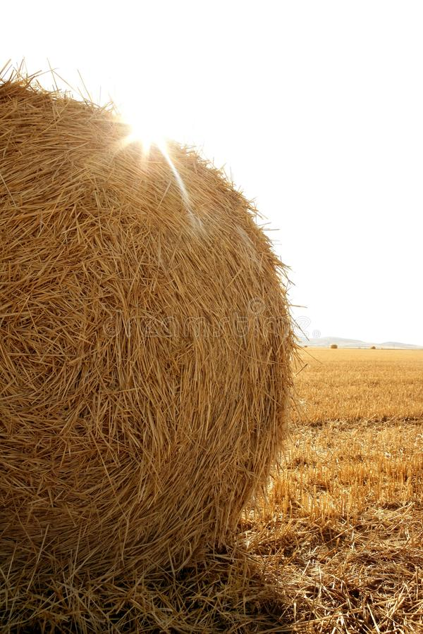 Download Hay Round Bale Of Dried Wheat Cereal Stock Images - Image: 12352814
