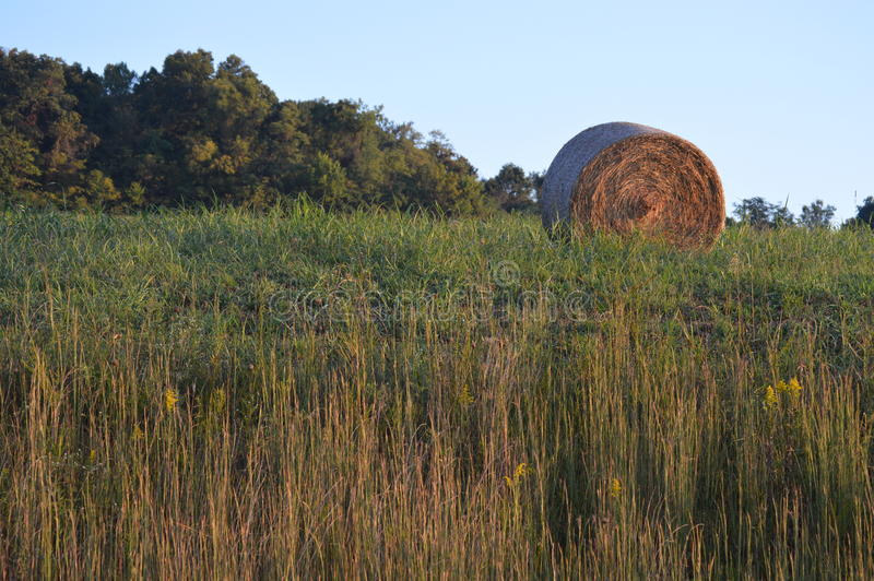 Hay. A round bale of hay in a field stock images