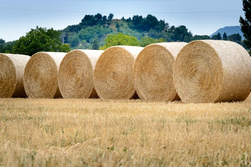 Hay round bales in field on a hot summer day , Catalonia village. Hay round bales in field on a hot summer day against the blue sky, Catalonia village stock photo