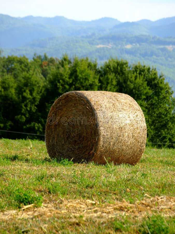 Free Hay S Roll Stock Images - 6315604