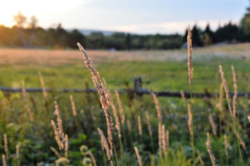 Hay shining bright on a breezy day right before sunset, Lebanon, Maine stock photos