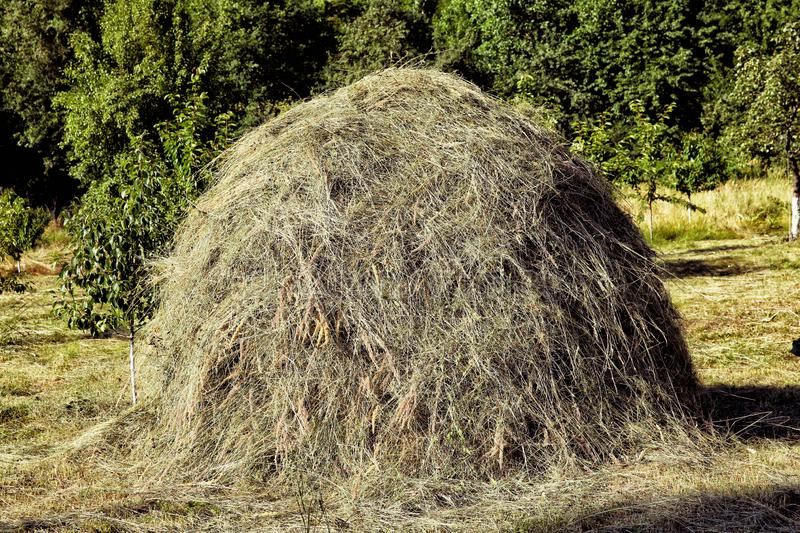Hay stack on a field nearby a plum trees orchard - Image . Close-up of a single big haystack near green forest in summer season. A large haystack on a green stock photo