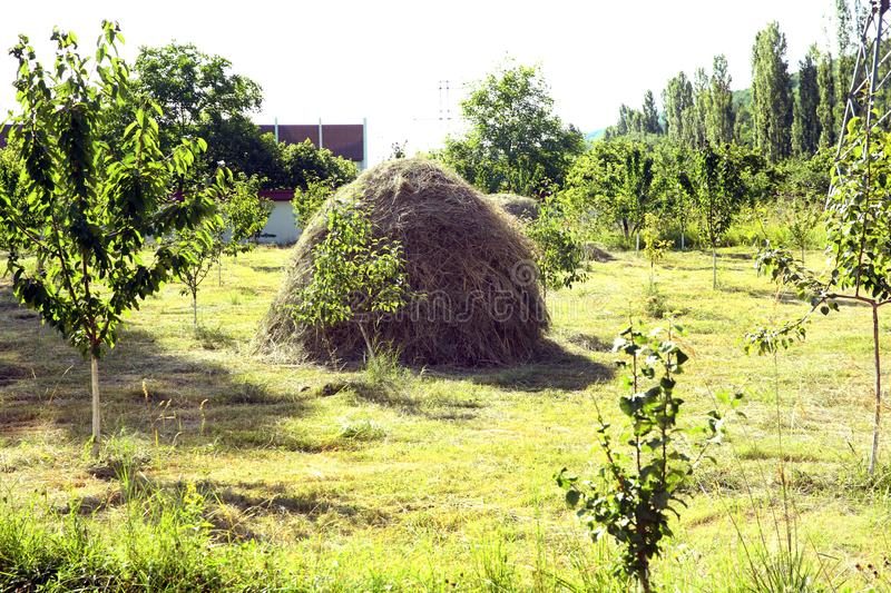 Hay stack on a field nearby a plum trees orchard - Image . Close-up of a single big haystack near green forest in summer season. Close-up of a single big stock images